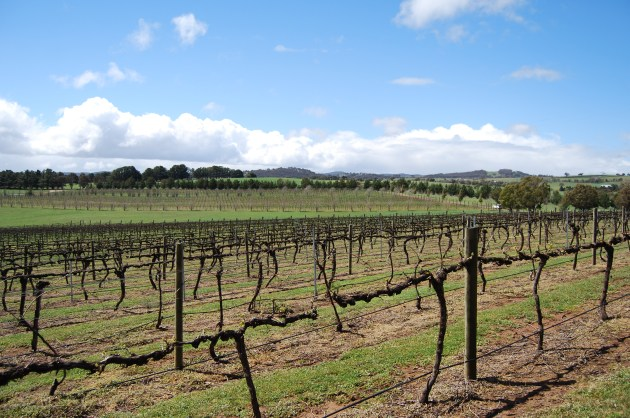 There are splendid vineyards in the Capital Country to Visit