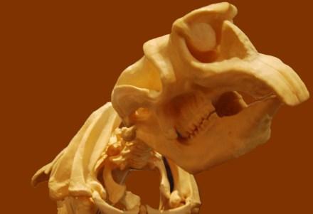 Dinosaurs found in Australia