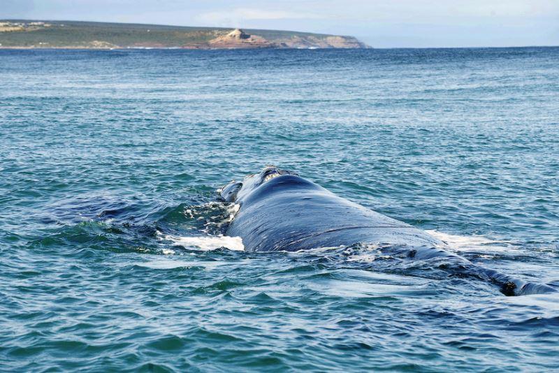 Australia's Coral Coast Kalbarri. Whale Watching in Western Australia