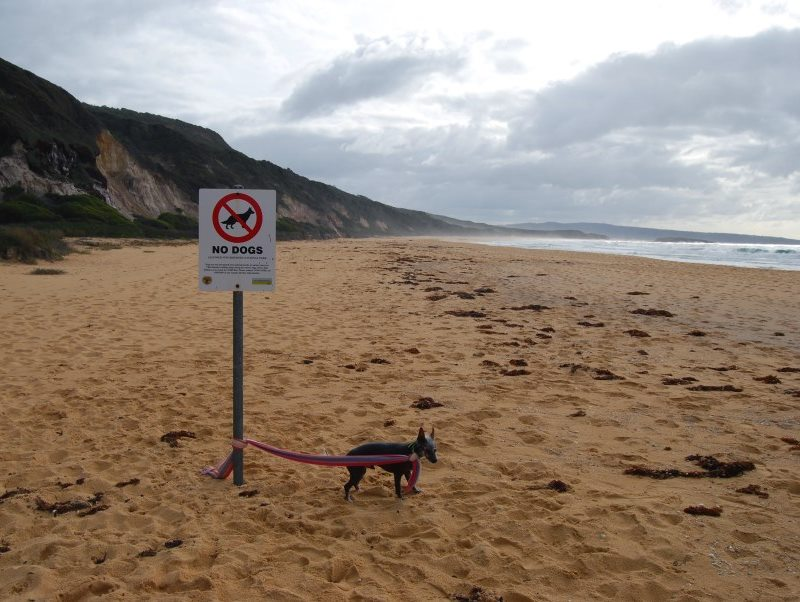 Sign on one of the beaches at Bournda National Park. Leave your pets at home.