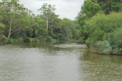 Parramatta River at the Root