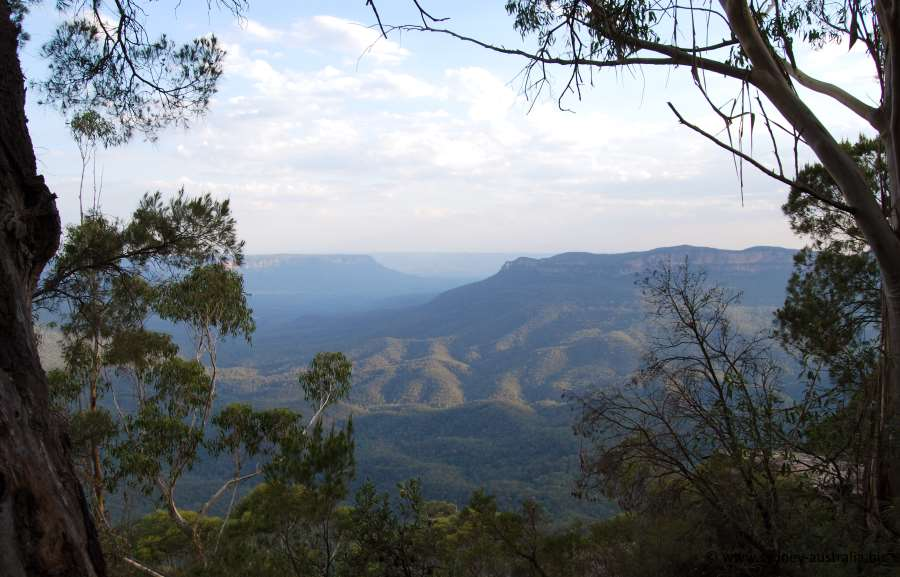Views to be had amongst the Eucalypt trees. You will find plenty to see and do here when you visit.