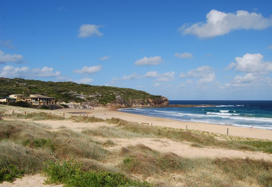 North Curl Curl Beach with the SLSC on the left and sand dunes in the foreground