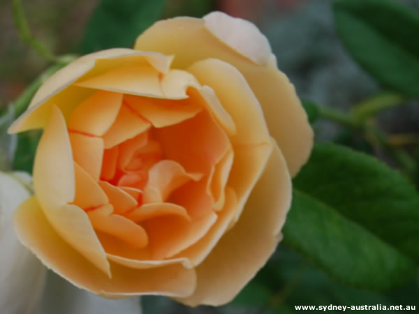 Australia Flower Photos