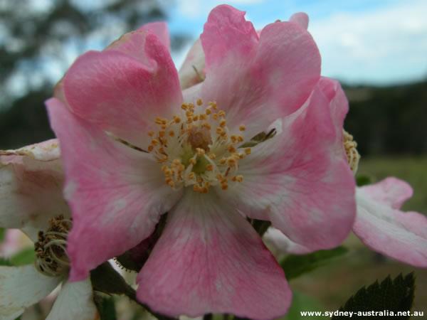 Park and Garden.Flowers found in Australia