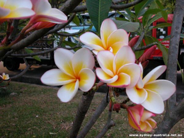 Flowers Found In Australia Photo 9