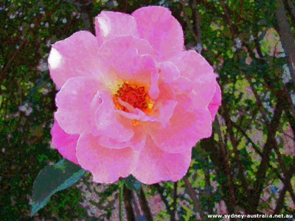 Flower Images - Australian Flora