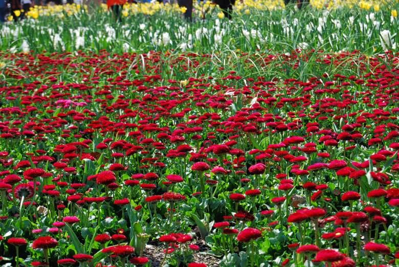 Floral Displays alongside the Lake Burley Griffin