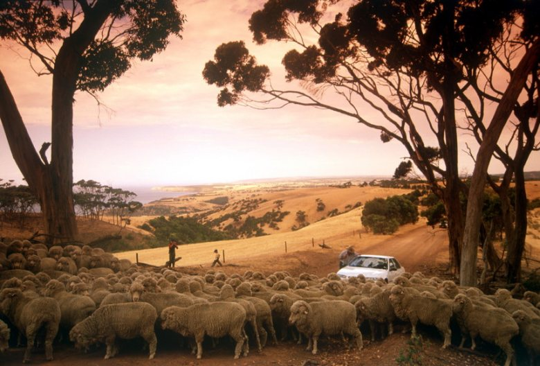 Taking a self drive tour through Kangaroo Island is one way to view this place.