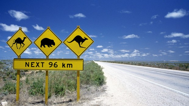On the Road in Australia: Kangaroo Sign with Wombats and Camels for the next 96km