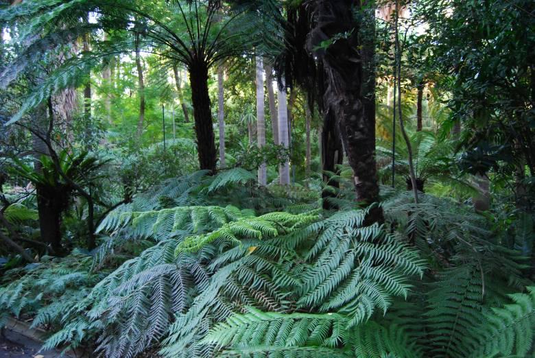 Botanic Heritage in Melbourne Australia