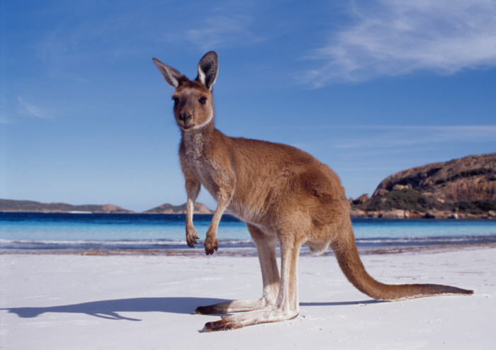 Western-australia-kangaroo-beach