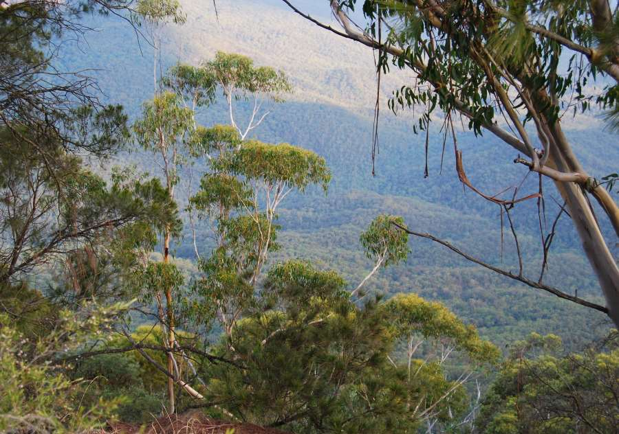 View of Jamison Valley in the Blue Mountains with its millions of Eucalypt Trees