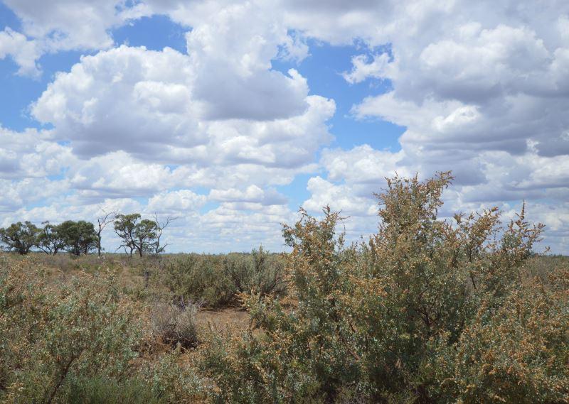 The dense Desert Scrubland of Yanga National Park