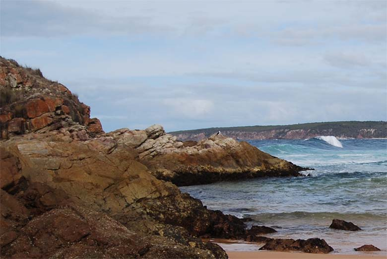 Penguins, King Fishers, dolphins and seals can be seen along the NSW South Coast.