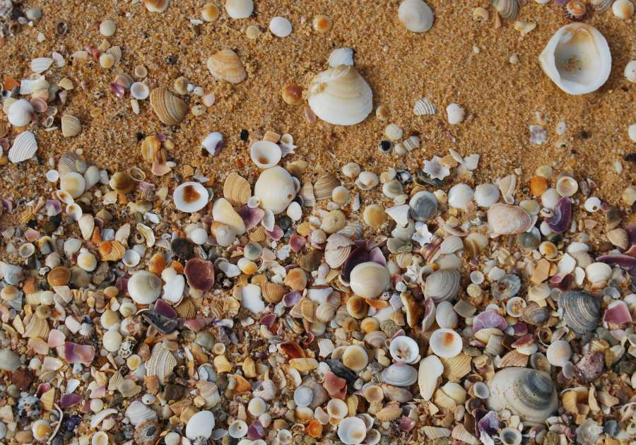 Sea Shells - some new, others many millions of years old mix with reddish sands of the Sapphire Coast NSW.
