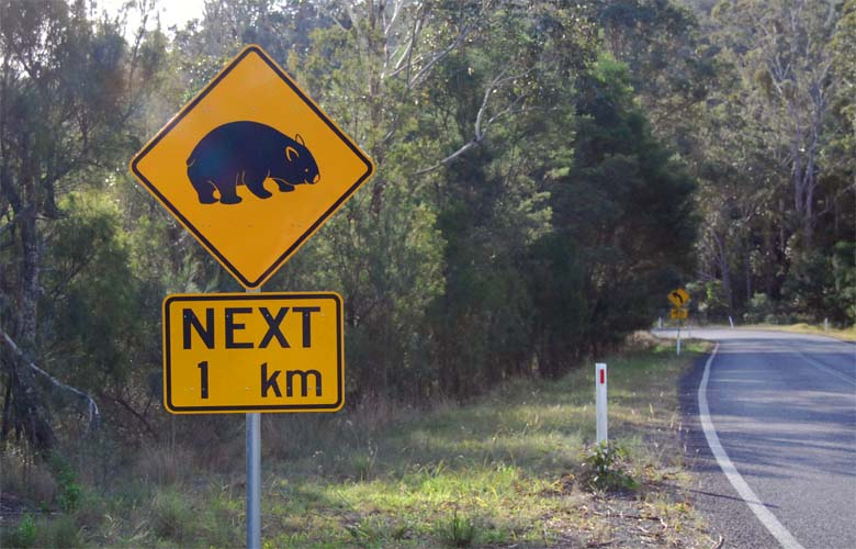 Wombats Cross Here - On the Bermagui Tathra Road, South Coast.
