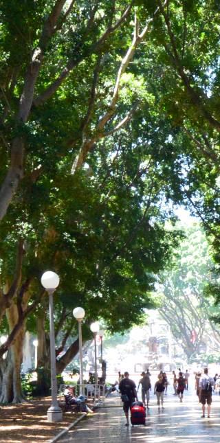 City Trees, Memorials and Plants
