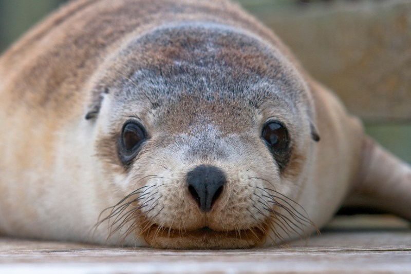 Sealions come here to rest and play. Credit: Southern Ocean Lodge.