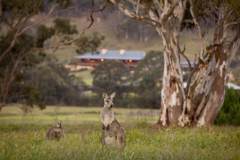 Wildlife of Australia at the Wolgan Valley Resort & Spa, Blue Mountains, NSW. Credit: Emirates.