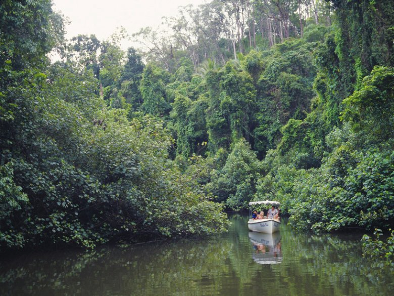 Cruising the Daintree River.