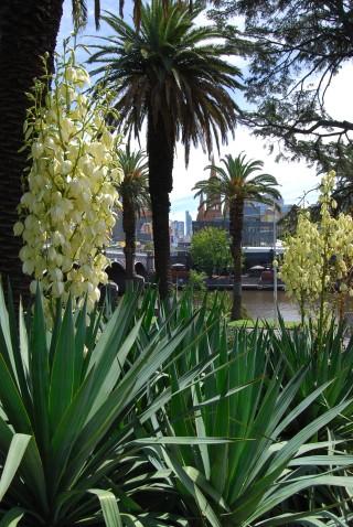 Alexandria Gardens and the Victoria Gardens View