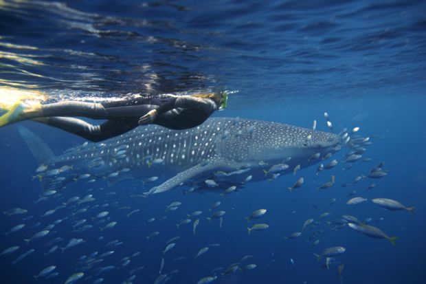Ningaloo Reef Australia Tourist Guide